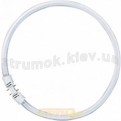 Лампа люминесцентная FC 55W/830 2GX13 круговая OSRAM