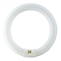 Люминесцентная лампа Philips TL-E 32W/54-765 G10Q кольцевая